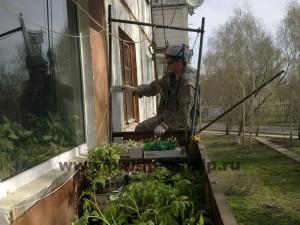 Чистка фасада. Олег в помидорах.